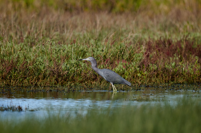 20181103 - Brazoria Wildlife Refuge-85B_4009.jpg