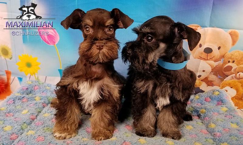 Jodie Pups 004.jpg