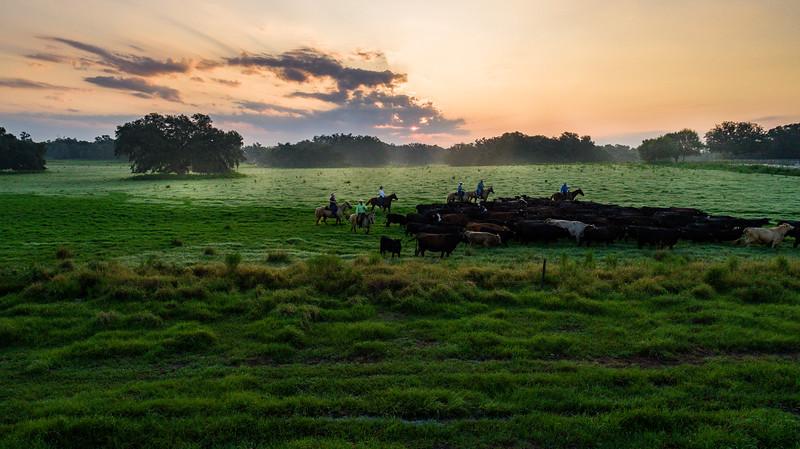 Barthle Cattle  (18 of 27).jpg