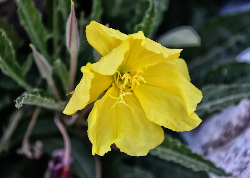 NEA_1159-7x5-Flower.jpg