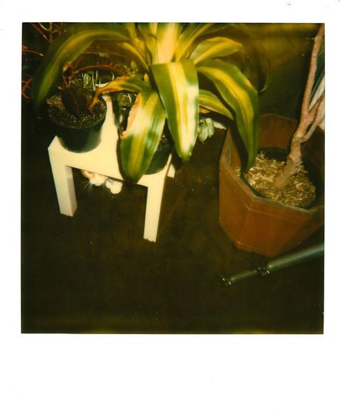 Polaroid_0074-XL.jpg