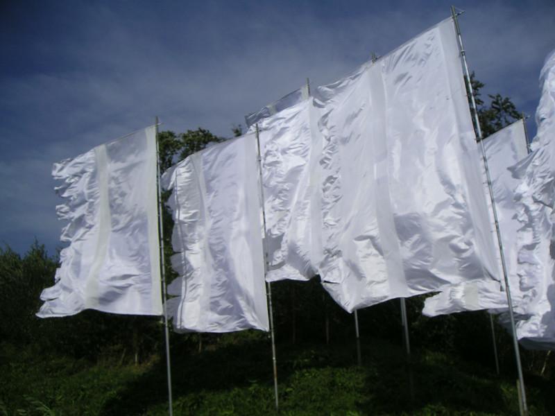 31 White Flags.JPG