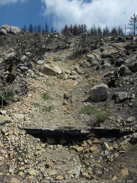 20100509034-Trail Recon, Silver Mocassin (Charlton to Shortcut).JPG