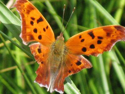 Fauna, Flora, Geology, Landscapes