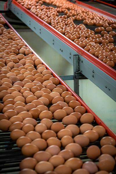Eggs 42.jpg