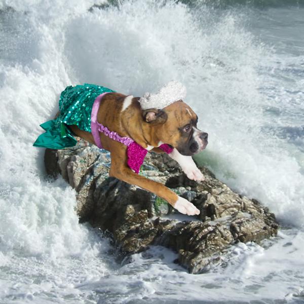 Mermaid Bruce.png