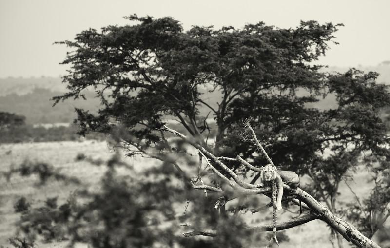 Uganda_T_QE-1137.jpg