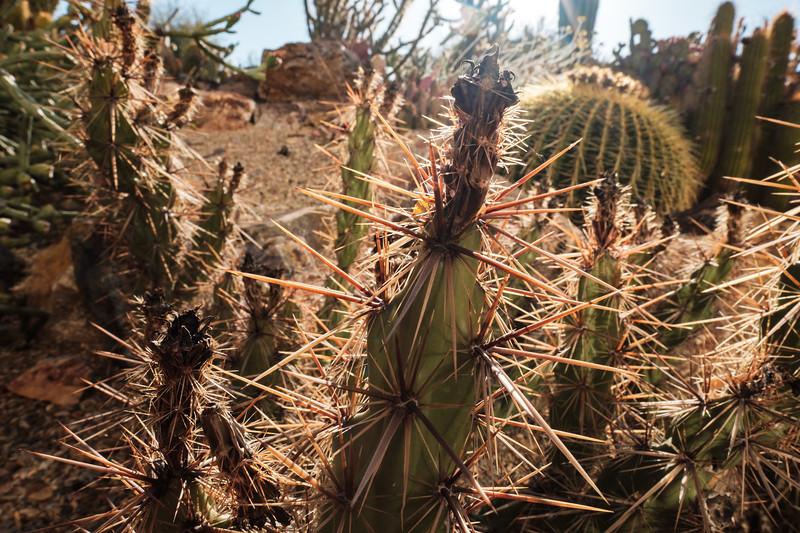 Tucson_17-759.jpg