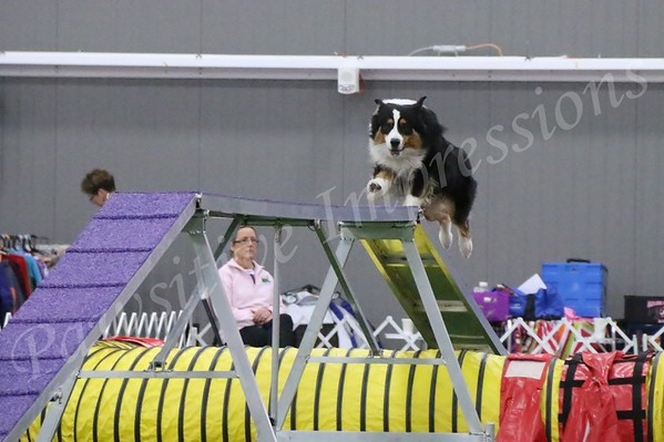 ESSFTA National Specialty All Breed Agility Monday 11 03 14