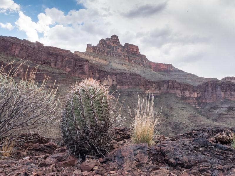 Grand Canyon-229.jpg