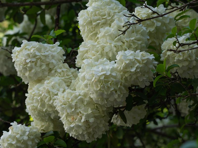 Garden_apr20-4200135.jpg