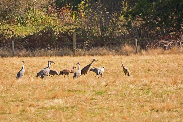 Sauvie Island Wildlife Refuge, Sans Cranes, 9-23-15