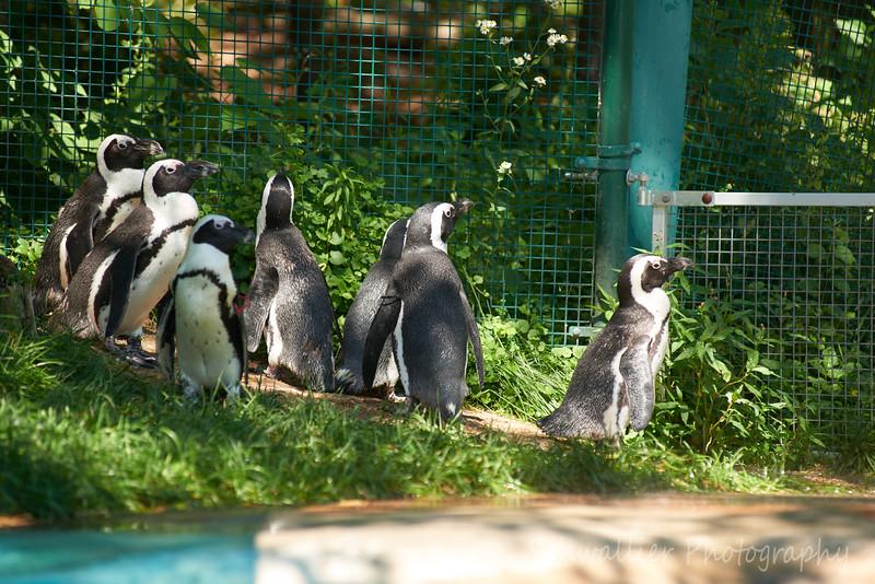 At 2018 Zoo * 005.jpg