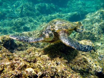 2010 Kauai Day 4