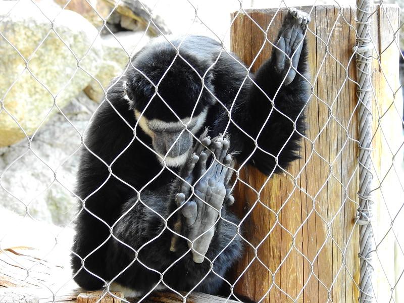 Cheyenne Mtn Zoo 2019 (1075).JPG