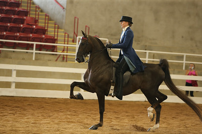 34. ASB Three-Gaited Park – Novice Horse
