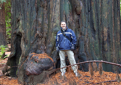 California Forests 2011.11