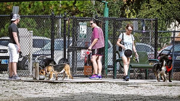 Enterprise Dog Park, 2671 Enterprise Rd E, Clearwater, FL 33759