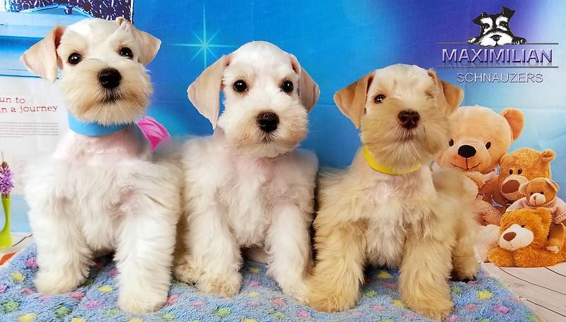 Jasmine Pups 002.jpg