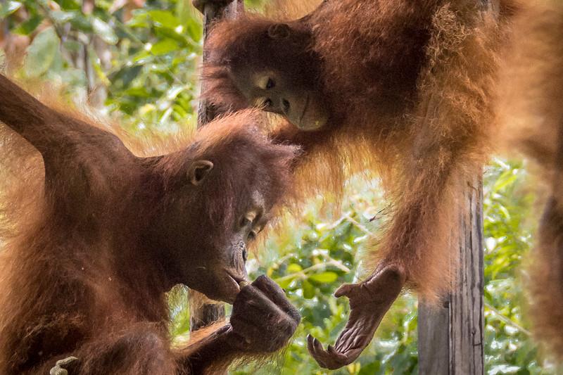 Borneo-2252.jpg