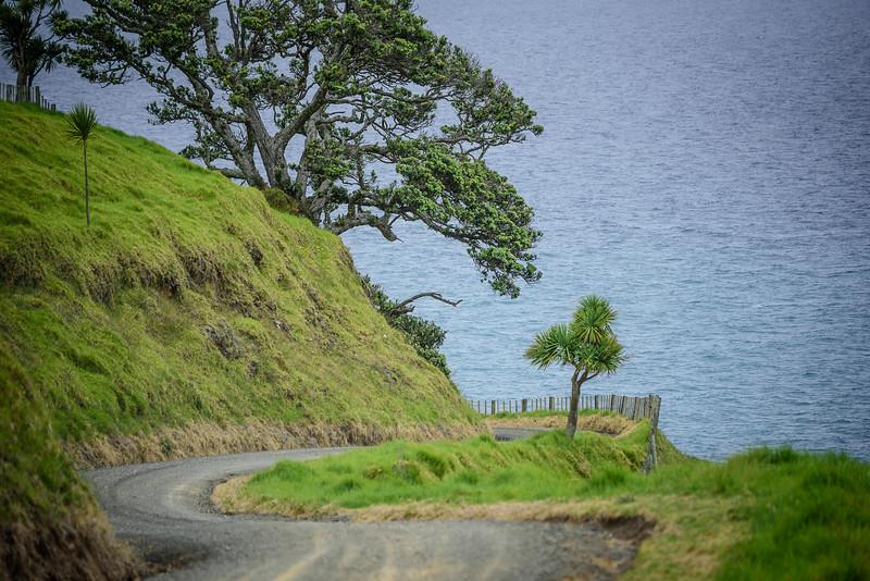 2018 KTM New Zealand Adventure Rallye - Northland (621).jpg