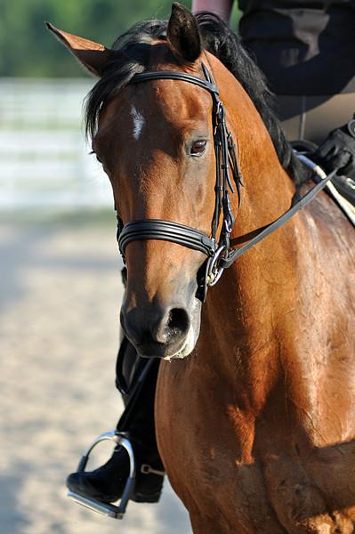 Horses July 2011 417a.jpg