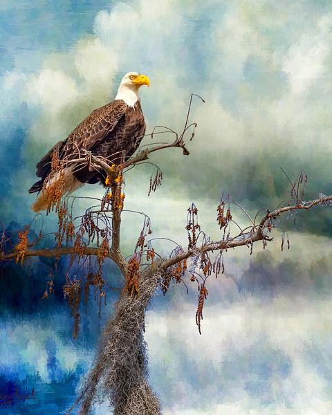 eagles2_DSC9596-1-copy.jpg