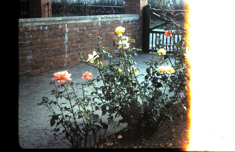 1959-9-18 (38b) Garden @ Driffieldd East Yorkshire, England.JPG