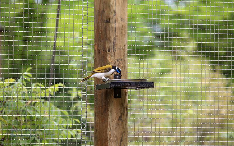 2016-07-17 Fort Wayne Zoo 899LR.jpg