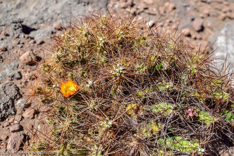 10.12_Atacama-6102690.jpg