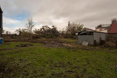 Creggane Fallen Trees