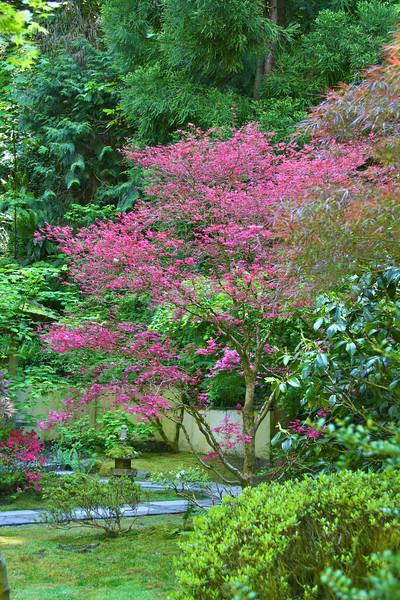 Portland Japanese Garden 6-3-11  1758.jpg