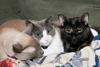 Pets January 2007