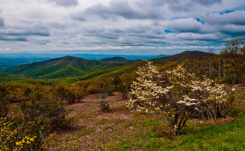 View of Appalachian Mountains and meadow at an overlook on Skyline Drive, Shenandoah National Park, Virginia