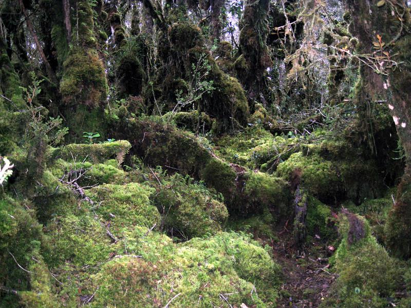 Papua jungle 5