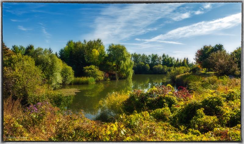 Pond Near Farm Boy Kanata