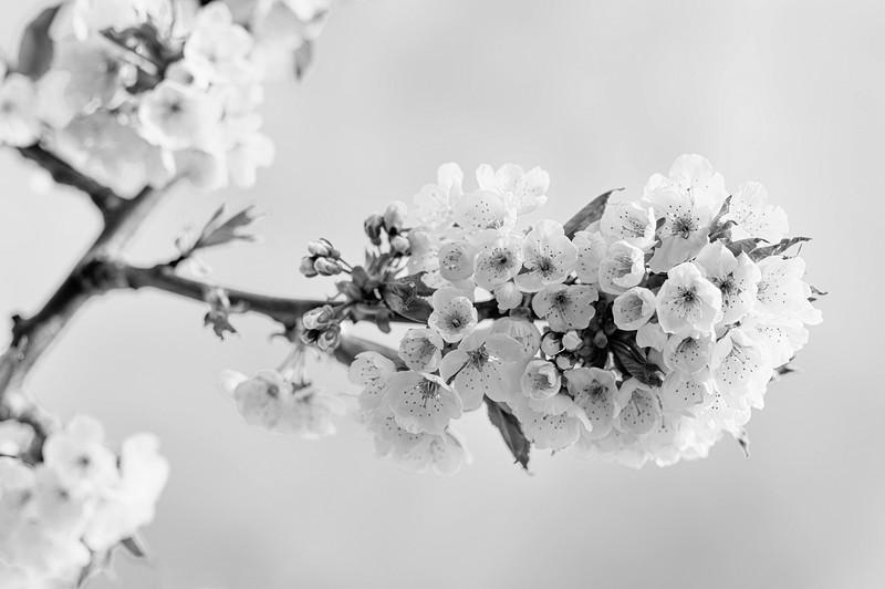 Promises black and white.jpg