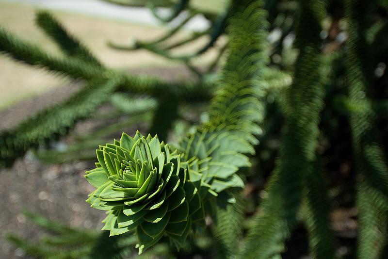 Beautiful flora at the Royal Botanical Gardens in Kew, England