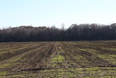 In Farmer's Fields  11-25-17