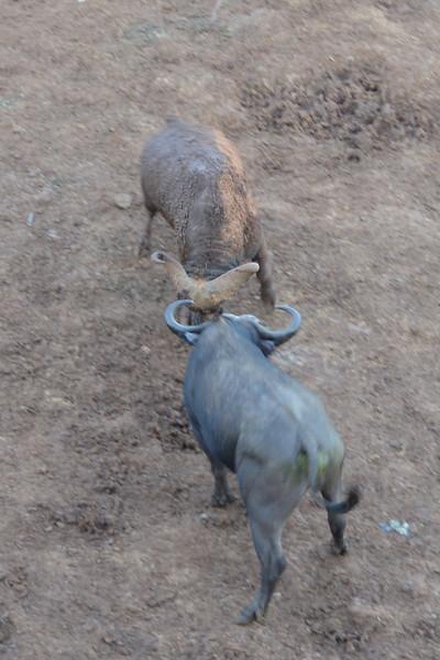 East Africa Safari 78.jpg