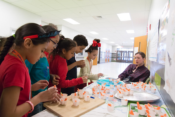 03/02/19 Wesley Bunnell | Staff Students at Gaffney Elementary School line up to sample garlic hummus made by FoodCorps Service Member Anna Tailleur, R. Tailleur puts on cooking, nutrition and gardening lessons in the Kindergarten through 4th grade range and holds taste tests once a month.