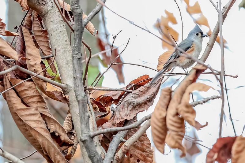 birds-107.jpg