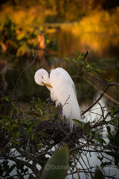 Florida an Avian Paradise (2014)
