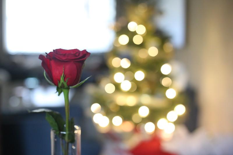 2019-12-22_ChristmasDecor-4460.JPG