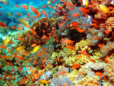 CORALS OF THE PHILIPPINES 1-13