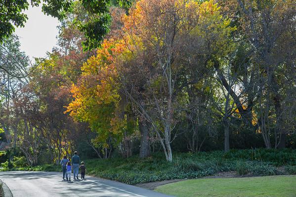 Arcadia Arboretum_Dec. 15, 2013