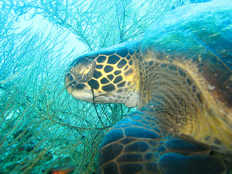 Diving in the Galapagos (16 of 392)