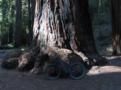 Montgomery Woods State Natural Reserve 7.6.2021