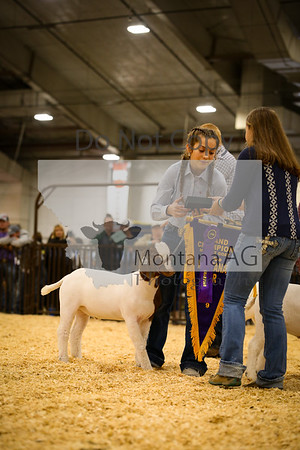 Market Goat Showmanship