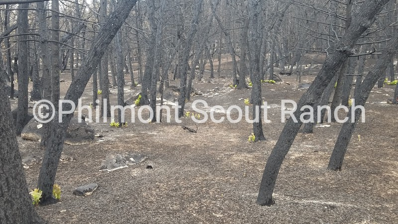 1st_2018_Philmont Recovery Corp_KyraWebster_Hope_Burn Area_426.jpg